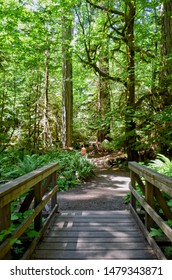 forest trail among lush greenery of a forest from Giant Trees at Rainforest in the Cathedral Grove on Vancouver Island, MacMillan Provincial Park Canada