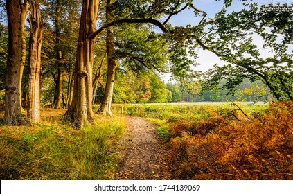 Forest trail in autumn scene. Forest trail view
