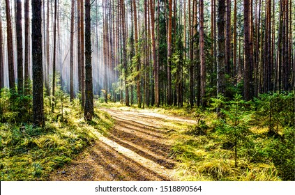 Forest trail in deep woodland with sunlight shadow - Shutterstock ID 1518890564