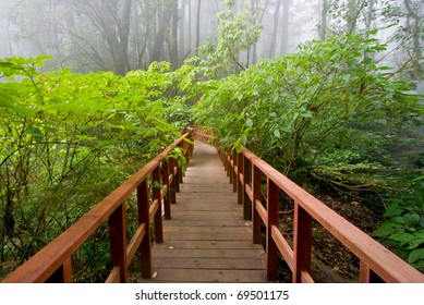 Forest Trail (Doi Inthanon National Park), Thailand