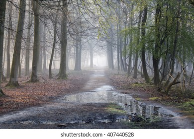 Forest trail in the early morning mist