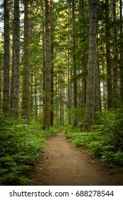 Forest trail with ferns on the sides