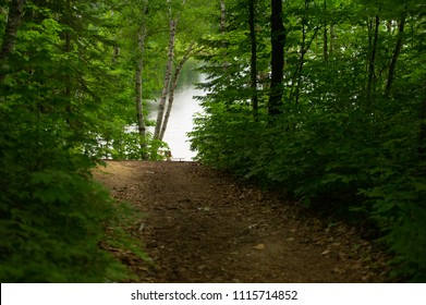 Forest trail leading to a lake with calm water