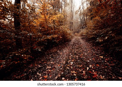 The forest trail leads through a beech forest with autumn Foliage