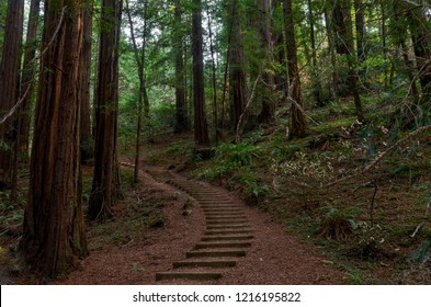 forest trail at Muir Woods National Monument, California