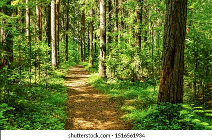 Forest trail scene. Woodland path