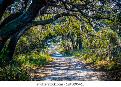 A forest trail with the sun shining through the foliage of the park in Orlando, Florida