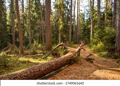Forest trail in sunny day. Trail in deep forest. Forest trail view