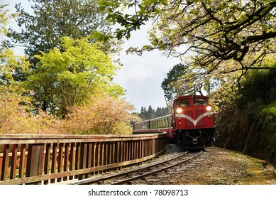 Forest train on railway with sakura in Alishan National Scenic Area, Taiwan, Asia.