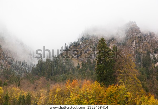 forest-transition-between-autumn-winter-