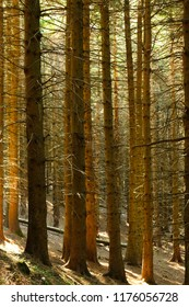 Forest tree background in vertical image