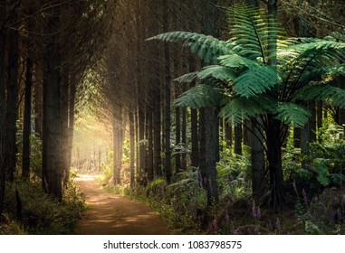 Forest with tree ferns, New Zealand