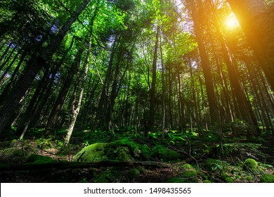 Forest Tree Nature Outdoor Jungle
