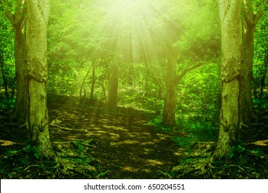 forest tree sunlight park nature background rays wood