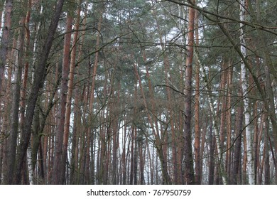 forest, tree, trees, wallpaper, nature
