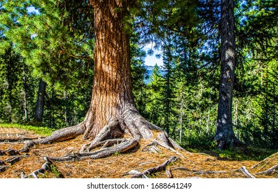 Forest tree trunk scene view. Tree trunk in forest. Forest tree trunk