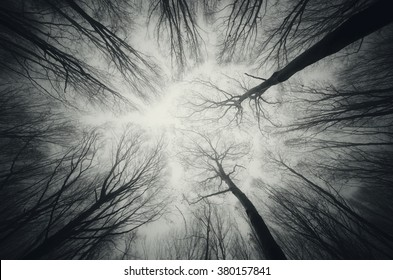 forest trees against sky at night