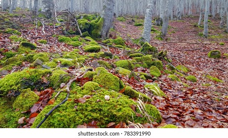 Forest trees in autum