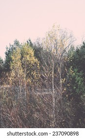 forest trees in autumn colors in countryside late autumn - retro, vintage style look
