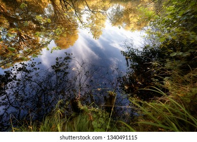 Forest trees in autumn reflected in a pond with clouds in the reflection creating a woodland fantasy scene