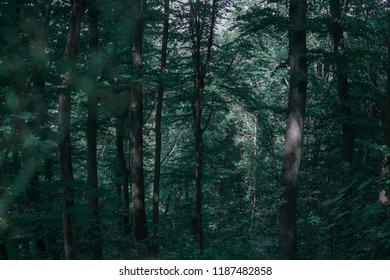 Forest trees with green leaves