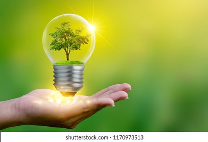 The forest and the trees are in the light. Concepts of environmental conservation and global warming plant growing inside lamp bulb over dry soil in saving earth concept