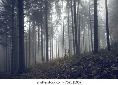 Forest trees in morning autumn season mist.
