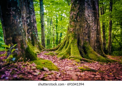 Forest with trees with moss