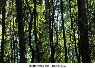 forest trees, nature green wood.