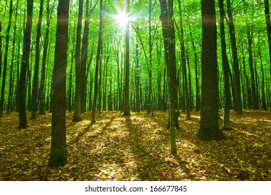 forest trees. nature green wood sunlight backgrounds. autumn