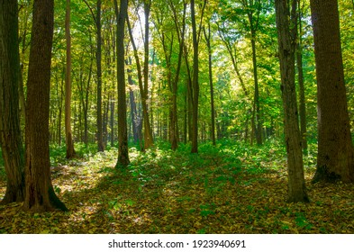forest trees. nature green wood sunlight backgrounds.