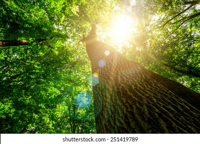 forest trees. nature green wood, sunlight backgrounds.