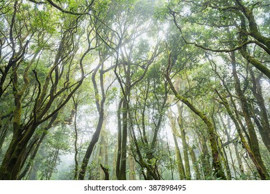 forest trees, nature green wood sunlight backgrounds, doi inthanon national park in chaing mai, thailand