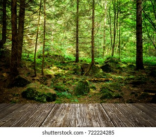 forest trees. nature green wood sunlight backgrounds. sky