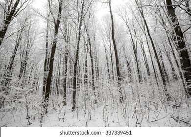 forest trees. nature snow wood backgrounds. winter