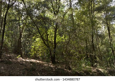 Forest trees and plants in summer
