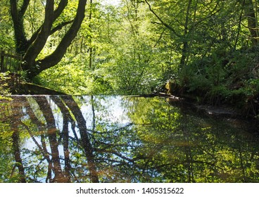 forest trees reflected in a calm river with dense tangled vibrant sunlit green summer foliage in calderdale west yorkshire