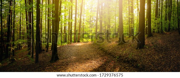 Forest trees with sidewalk of fallen leaves. Nature green wood lovely sunlight backgrounds.