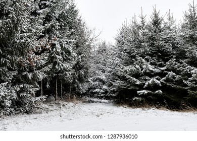 Forest and trees with snow in winter and blanket of clouds in Bavaria, Germany