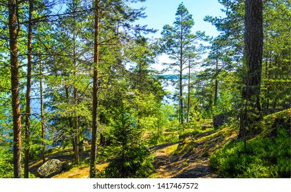 Forest trees summit scene view. Forest trees background. Forest trees view. Forest trees summit path