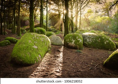 Forest Trees with Sunlight Bursting through Tree Branches at Sunset in the Woods with stones covered with moss. Sintra mountains in Portugal