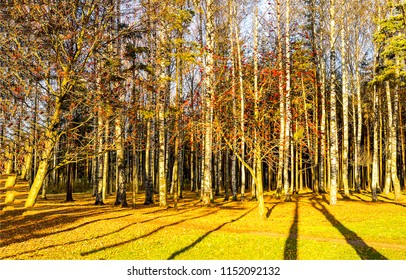 Forest trees sunlight landscape. Sunlight trees shadows in forest scene. Forest trees sunlight shadows view