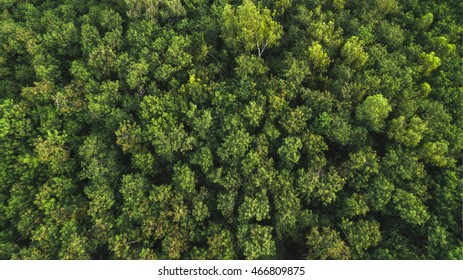 Forest Trees Top View Texture And Background