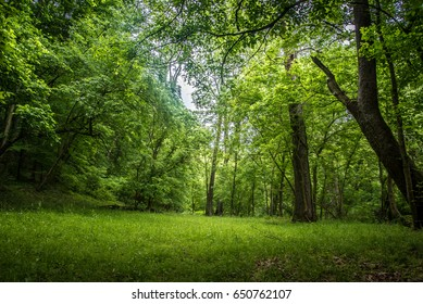 Forest Trees Wood and Fields Landscape