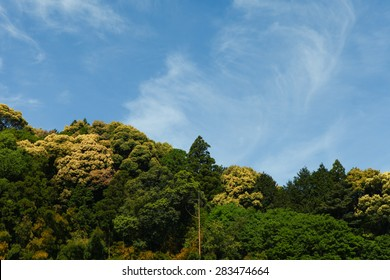 Forest treetops with blue sky