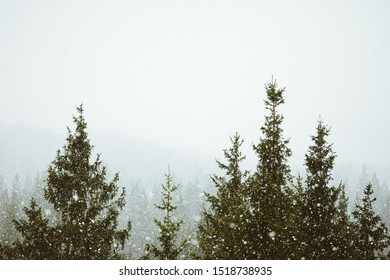 Forest Treetops in Fog nature
