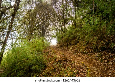 Forest Trekking Route to Sandakphu, Beautiful Hill Destination of Darjeeling, West Bengal, India
