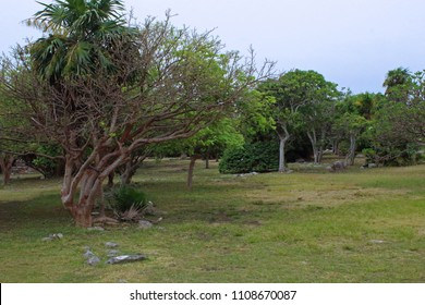 Forest in tulm mayan
