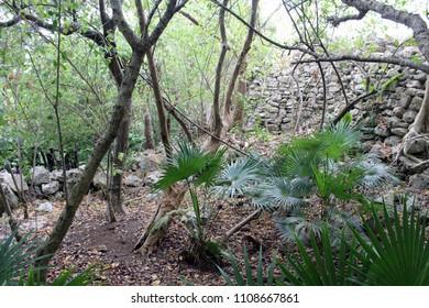 Forest in Tulum