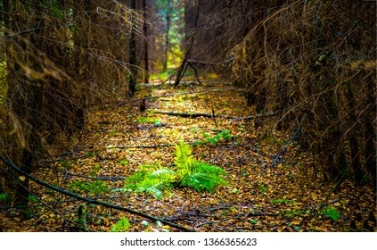 Forest tunnel trees road scene. Forest trees tunnel road. Dark forest trees tunnel path. Deep forest trees tunnel pathway